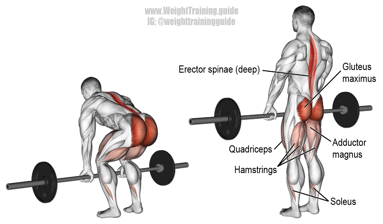 barbell-deadlift